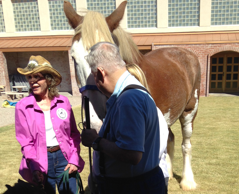 Trainer Nancy with JJ the large Clydesdale horse