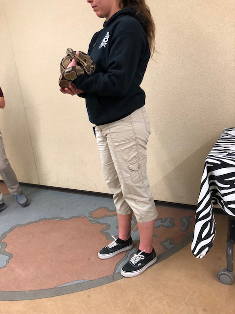 Zookeeper dramatically holds a reptile