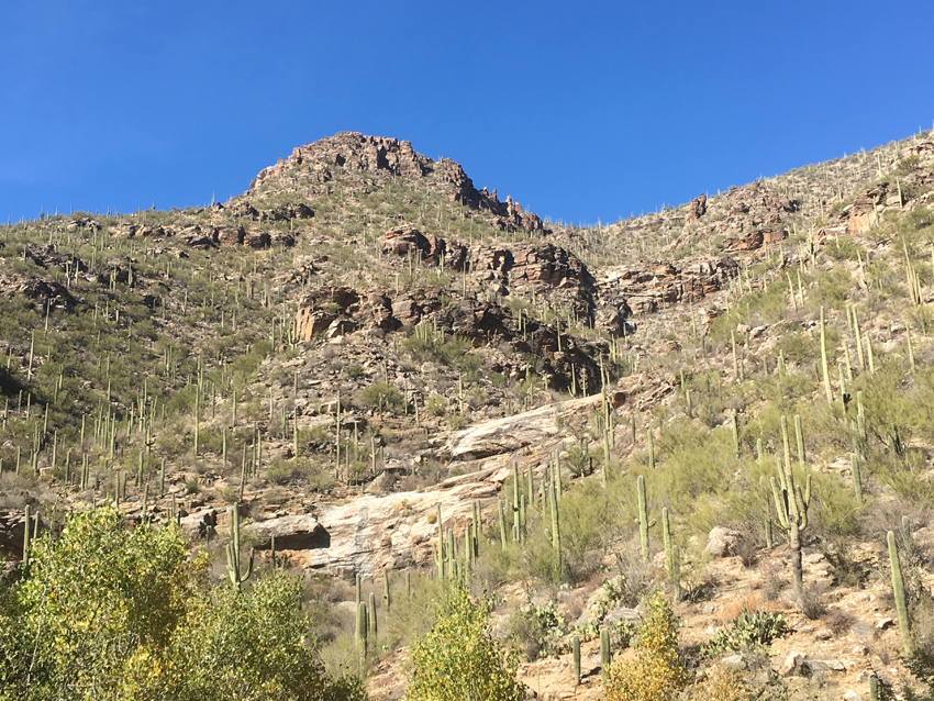 Looking up the tall walls of Sabino Canyon from the picnic area, where a large out cropping of rocks is purhed at the top.  Seguaro cactuses speckle the hills soaking up the sun on this cloudless day.